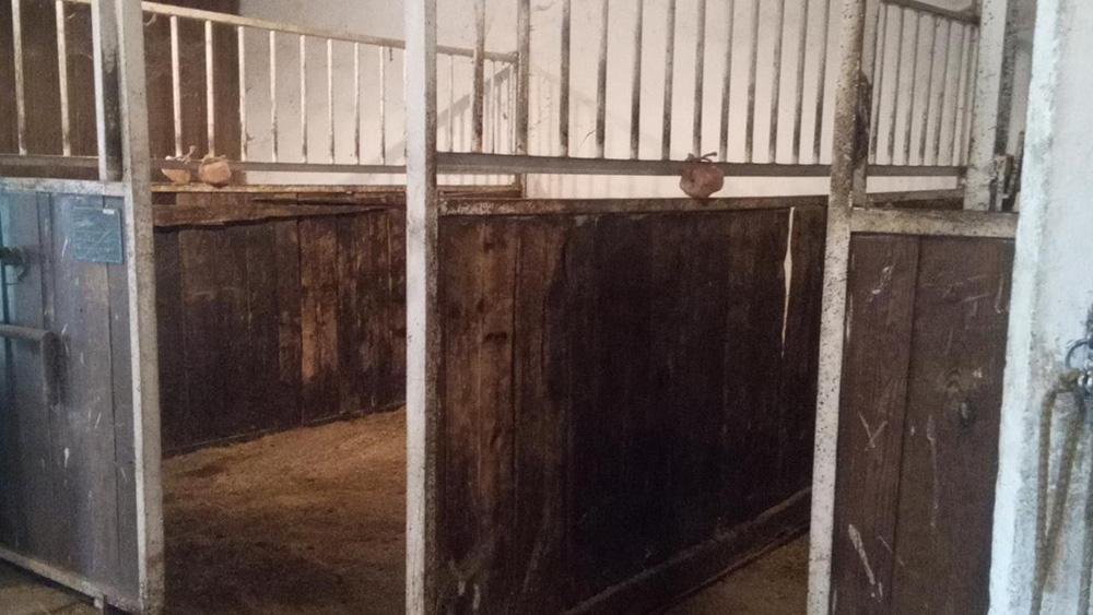 Pferdeboxen für Pferdeeinsteller des Reiterhof Kaidern bei Feldkirchen in Kärnten