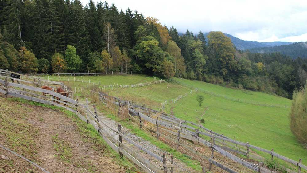 Parddock Koppel vom Reiterhof Kaidern in Kärnten