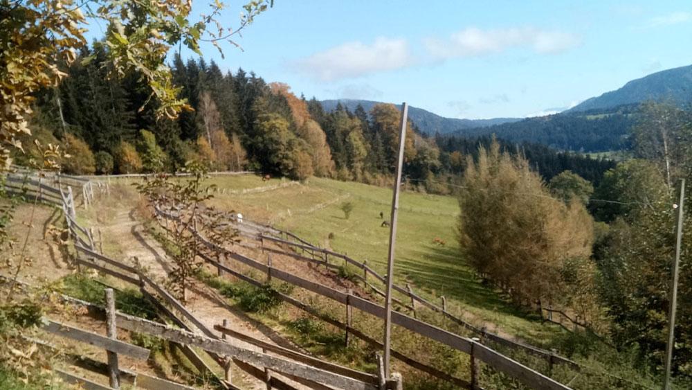 Pferdeeinstellplatz mit Ausrittmöglichkeit in Kaidern bei Feldkirchen in Kärnten